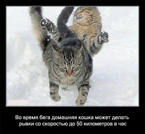Факты о кошках (29 фото)