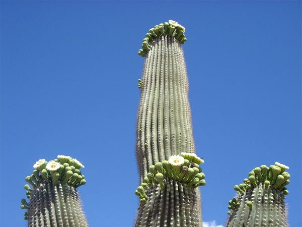 Топ 10 самых необычных растений (10 фото +текст)