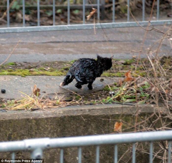 Утопающий котенок (7 фото)