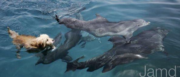 Дружба собаки и дельфинов (11 фото + текст)