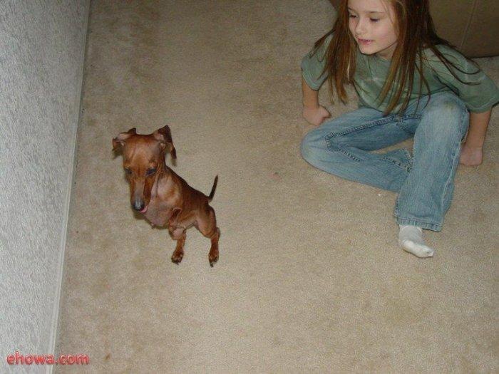 Бедная собачка... (12 фото)