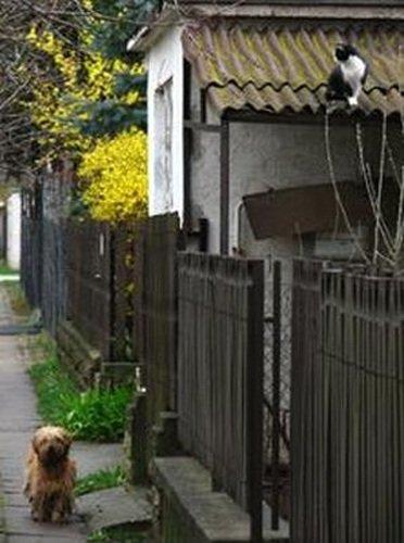 Дружба кота и пса (7 фото)