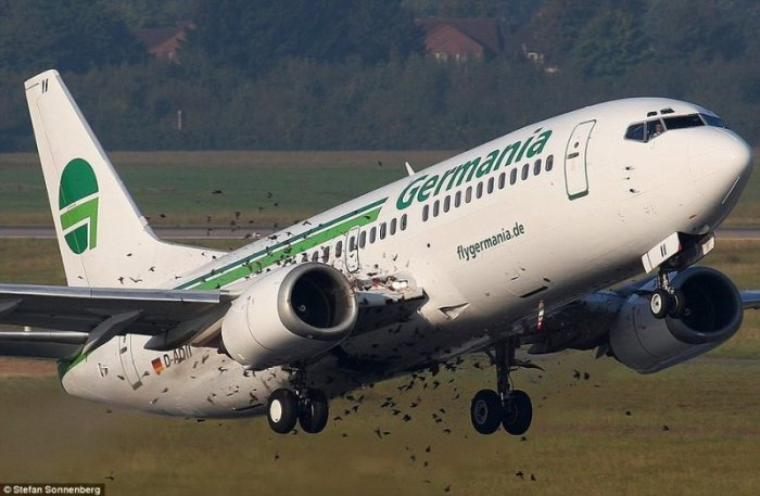 Самолет против стаи птиц (3 фото)