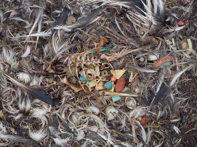 Что едят птицы (29 фото)