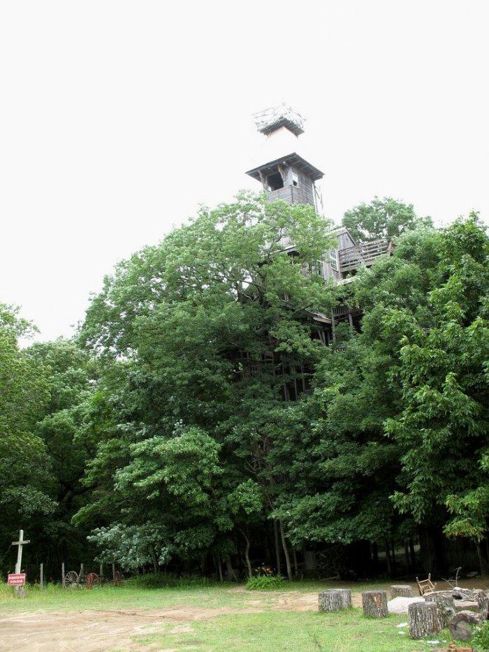Деревянный небоскреб (33 фото)