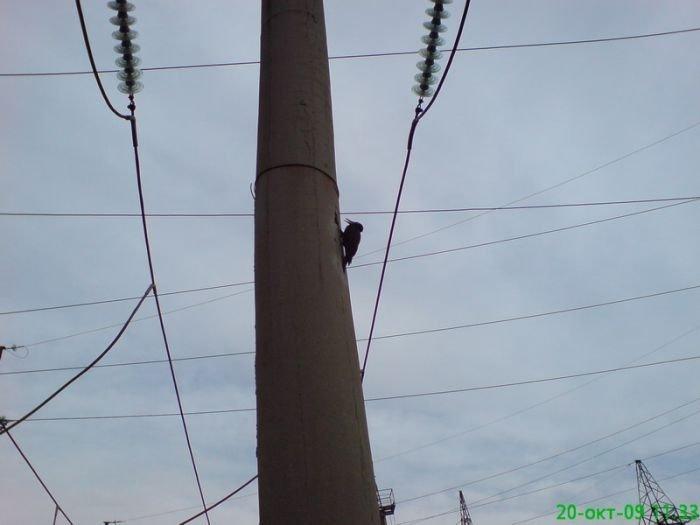 Суровый челябинский дятел (3 фото)