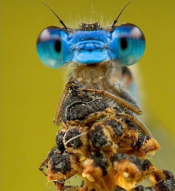 Забавные зверушки (45 фото)