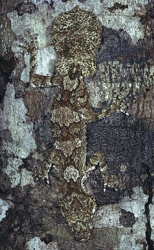 Природный камуфляж (18 фото)