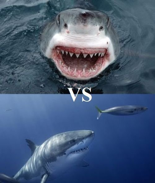 Акула каннибал (3 фото + видео)