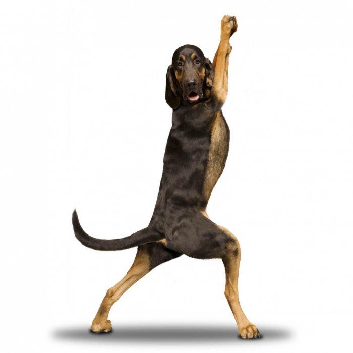 Собаки-йоги (12 фото)