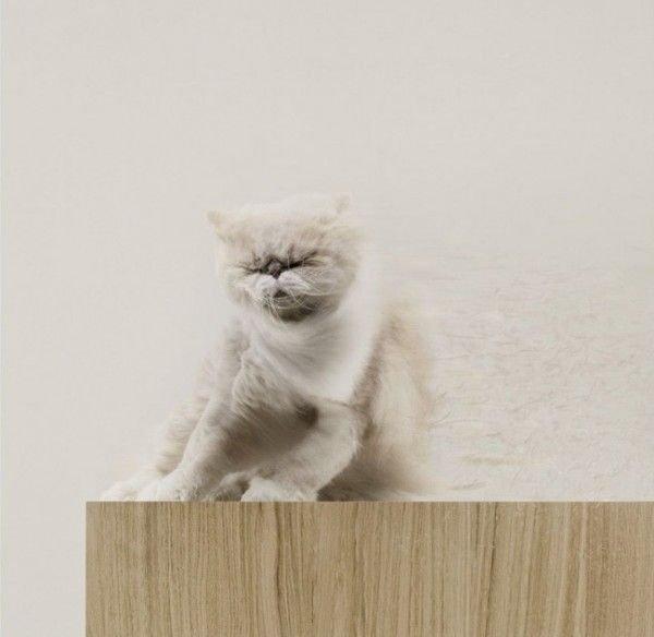 Забавные животные (38 фото)