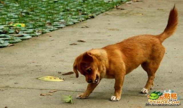 Собака играет с богомолом (4 фото)