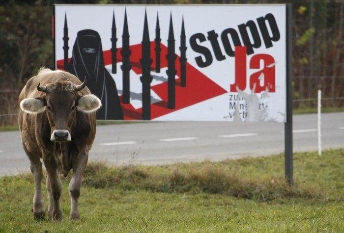 Корова против плаката (3 фото)