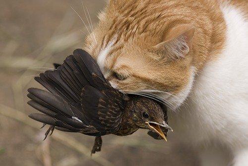Коты на охоте (29 фото)
