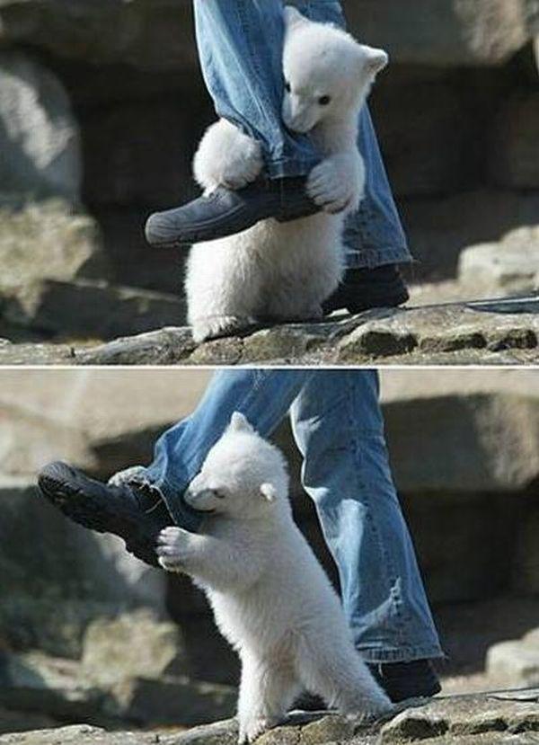 На парня напал белый медведь (3 фото)