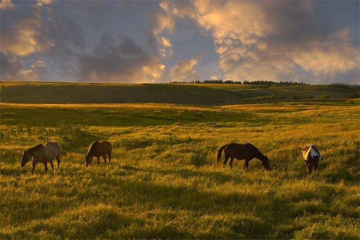 Красивые фотографии природы (40 фото)