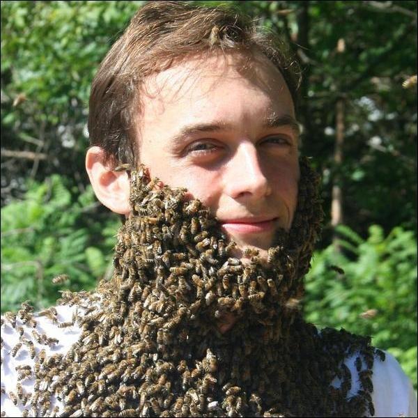 Люди и пчелы (23 фото)