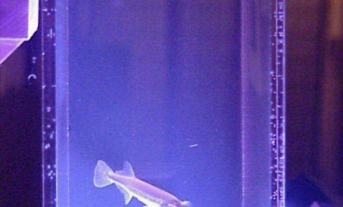 Необычный аквариум (9 фото)
