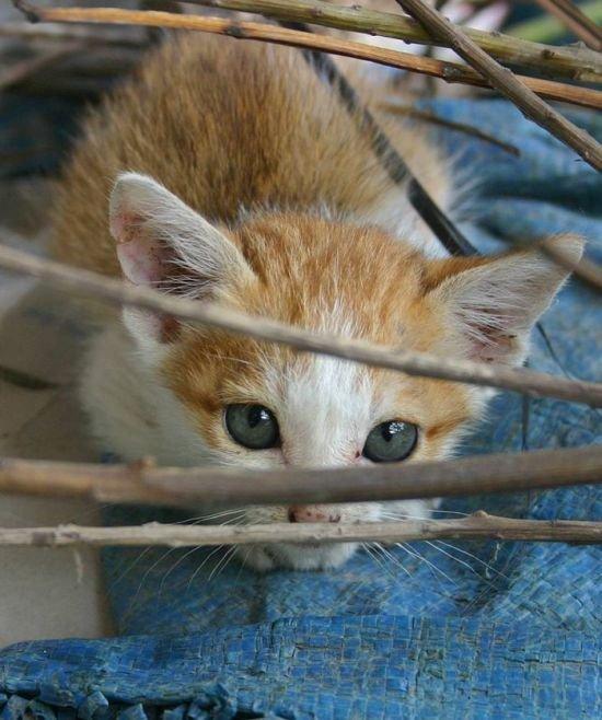 Котята (111 фото)