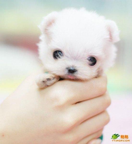 Мегапозитивные щенки (8 фото)