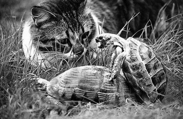 Зверушки (77 фото)
