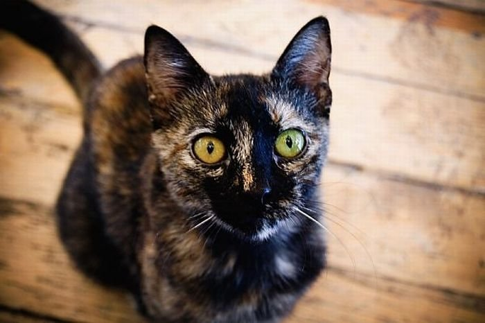 Разноцветные глаза у животных (12 фото)