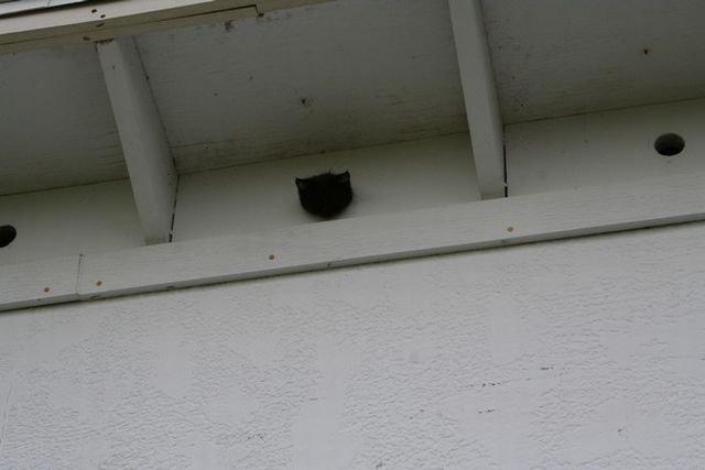 Застрявший котенок (9 фото)
