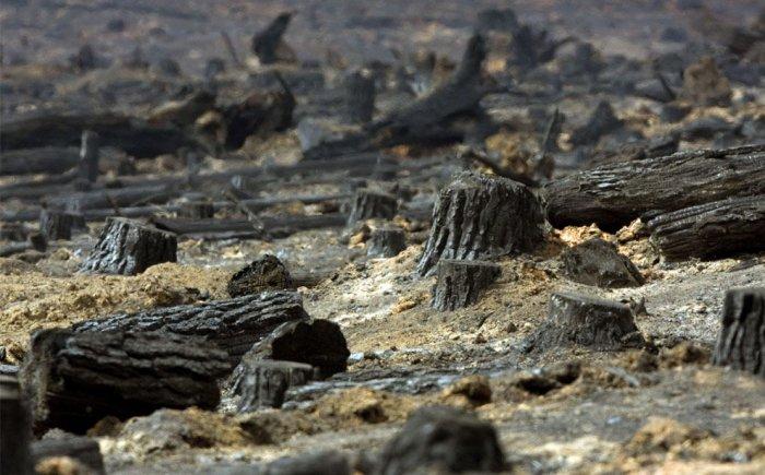 Австралия в огне (36 фото)