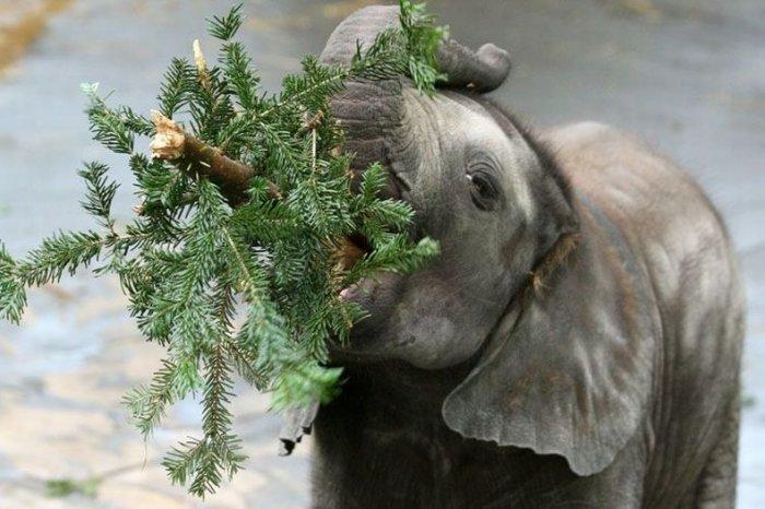Куда деть ненужные новогодние елки (7 фото)