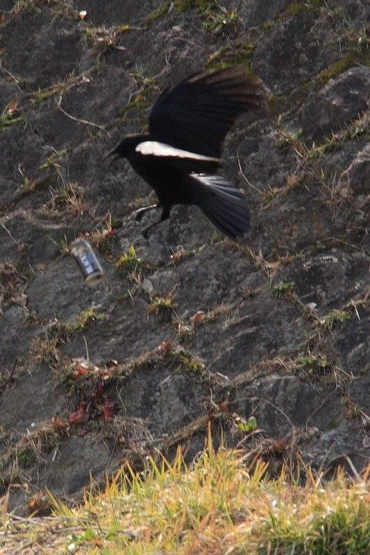 Птичка-алкоголик (6 фото)