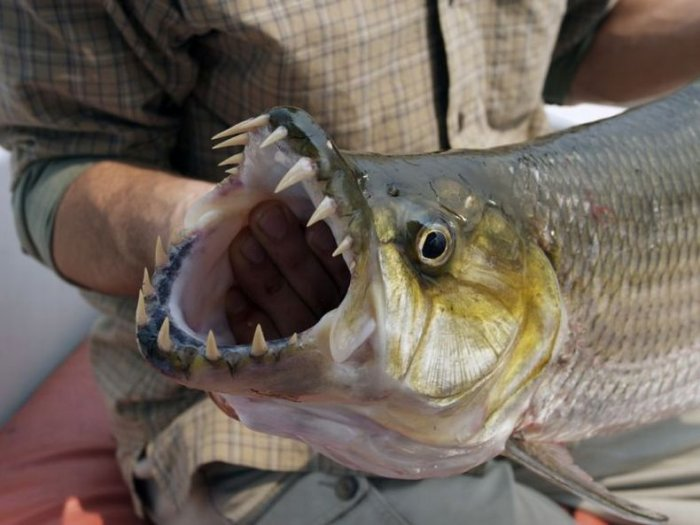 Страшные рыбки (6 фото)