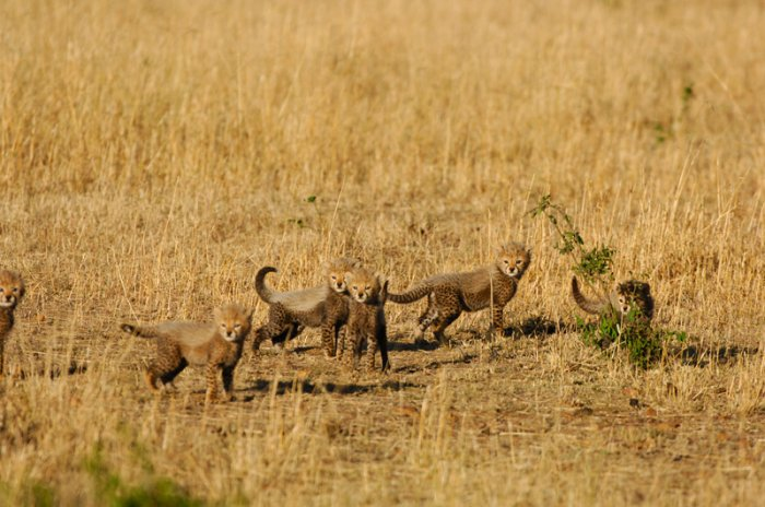 Подборка прикольных животных (20 фото)
