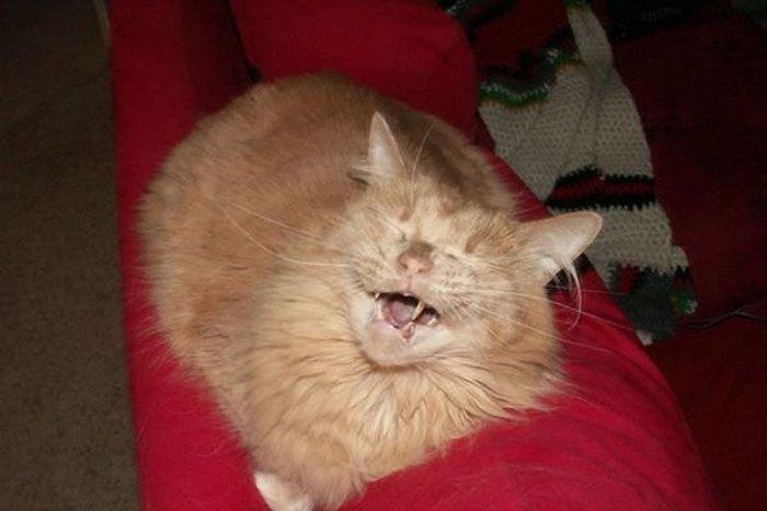 Кошачий позитив (28 фото)