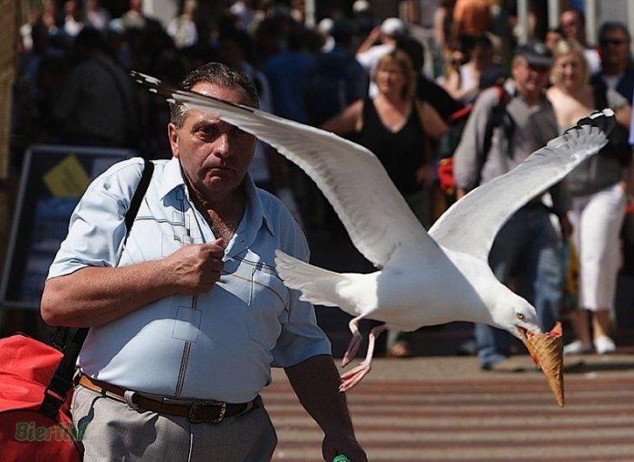 Наглые чайки (14 фото)