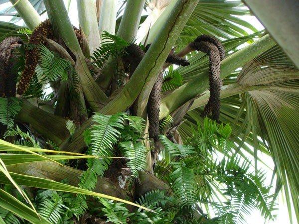 Необычное дерево (4 фото + текст)