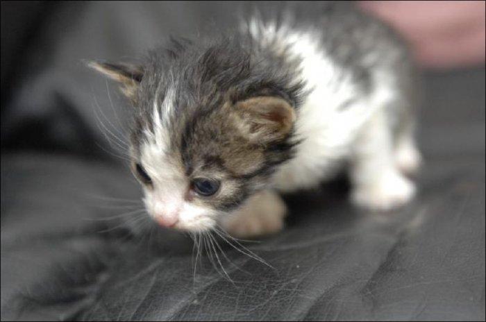 У котят новая мама (6 фото)