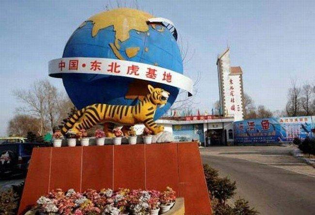 Аттракцион с тиграми (5 фото)