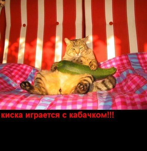 Порнуха на Загонах! (25 фото)