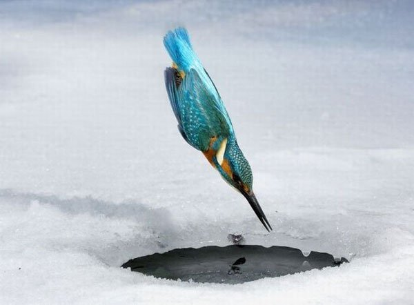 Ловля рыбы зимой (4 фото)