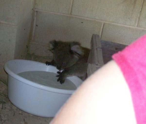 Ванная для коалы (5 фото)