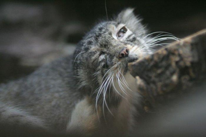 Погладь кота! (40 фото)