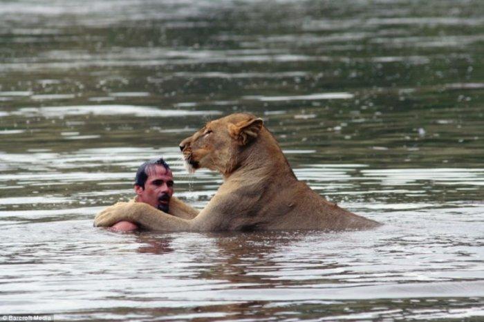 Купания со львом (4 фото)