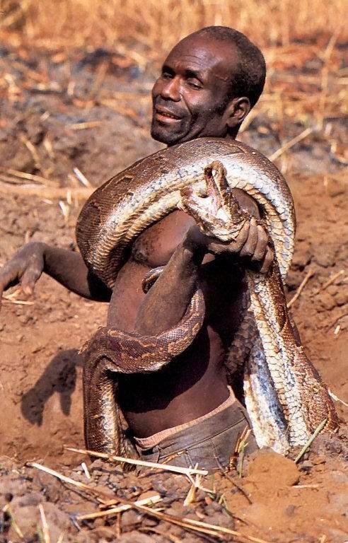 Ловля анаконды (9 фото)