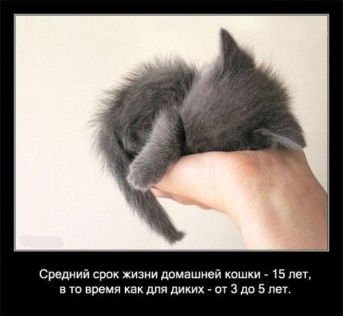 Интересное о кошках (56 фото)