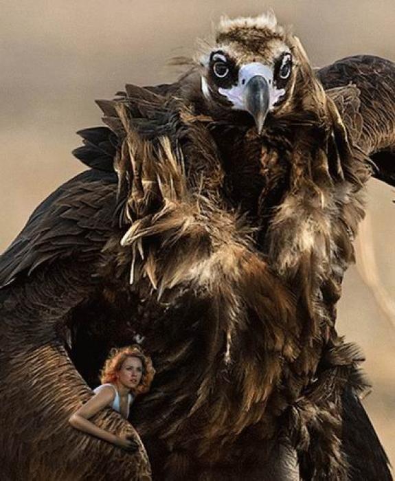 Отжабили птичку (19 фото)