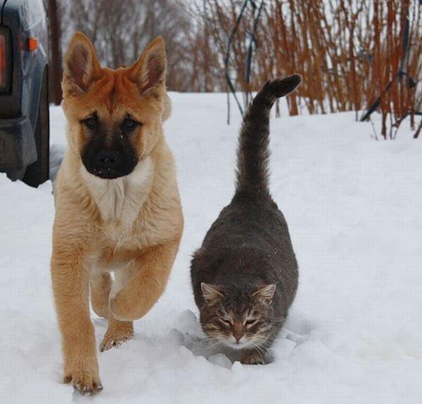 Дружба кота и пса (6 фото)