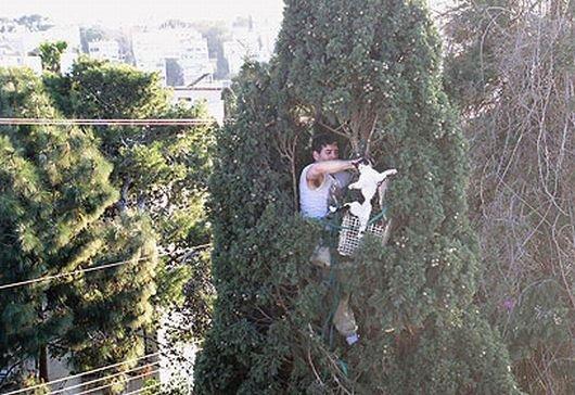 Как правильно собирать котов (7 фото)