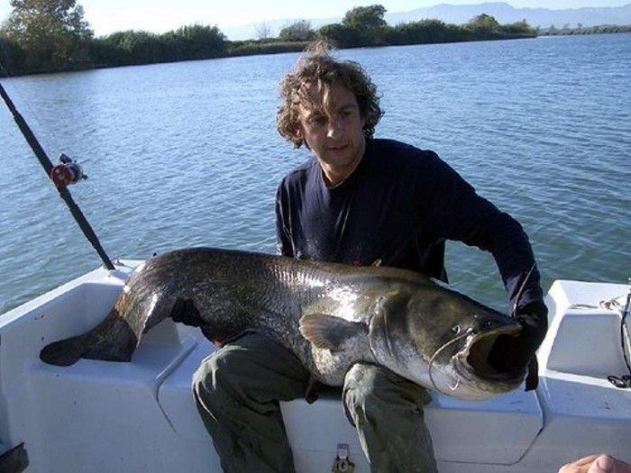 Рыбалка по-крупному (18 фото)
