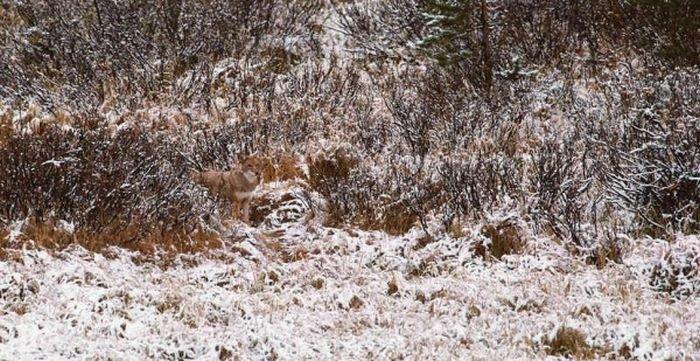 Как прячутся звери (20 фото)