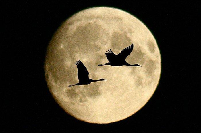 Очень красивые фотографии луны (14 фото)